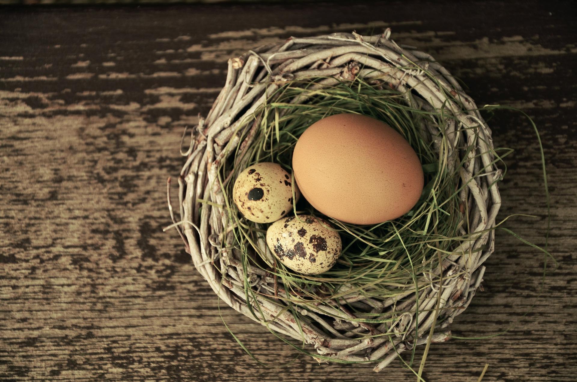 egg-1272815_1920